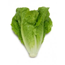 Fresh Green Romaine Lettuce Heart