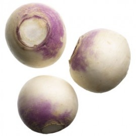 White Turnip